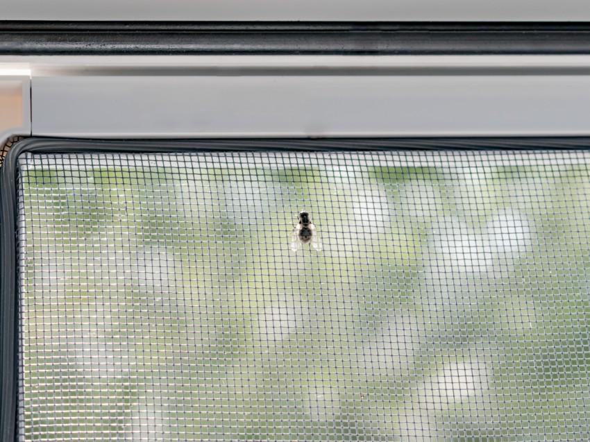 Dlaczego warto kupić moskitiery?